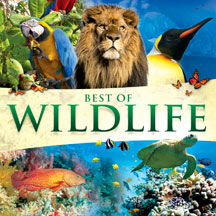 Global Journey - Best Of Wildlife